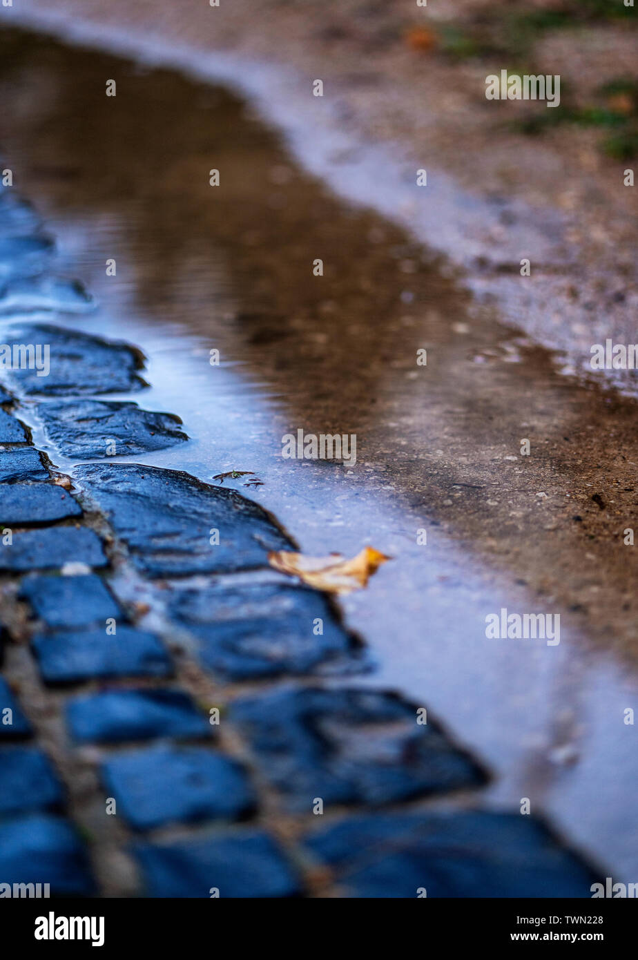 Cobblestones and a puddle of water with a fallen leaf inside. - Stock Image