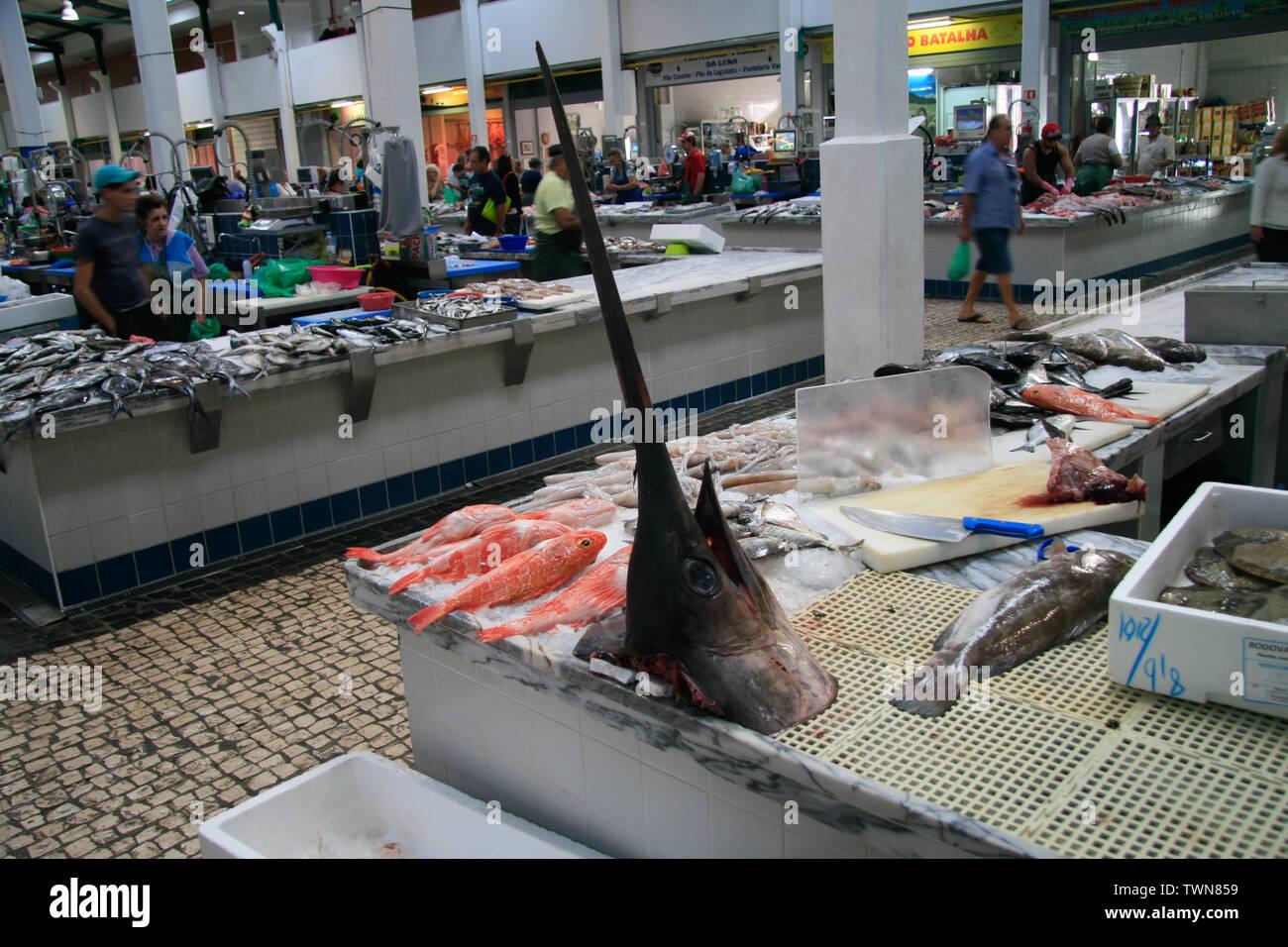 dead fish on the fish market - Stock Image