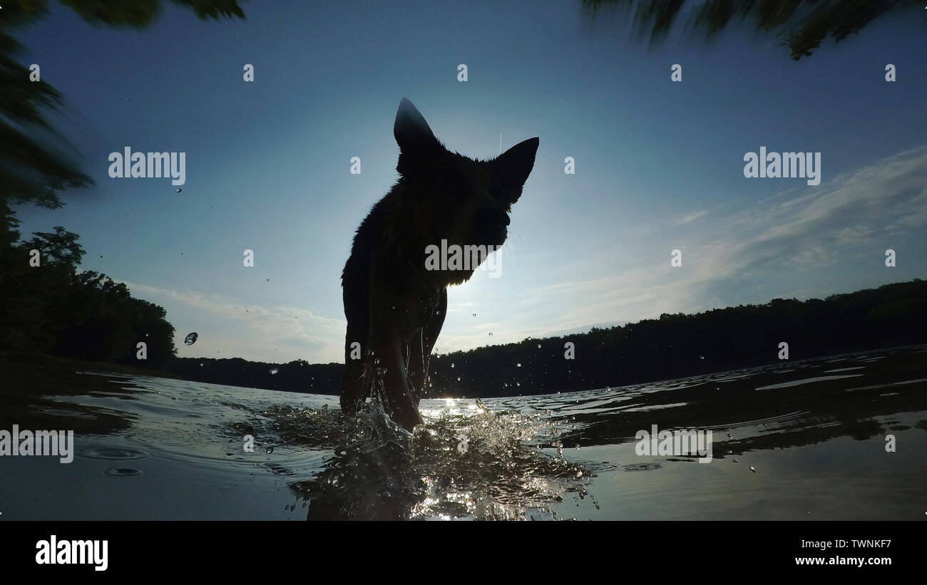 Berlin, Germany. 22nd Mar, 2016. A dog leaves the Grunewaldsee in the morning after a bath. Credit: Paul Zinken/dpa/Alamy Live News - Stock Image