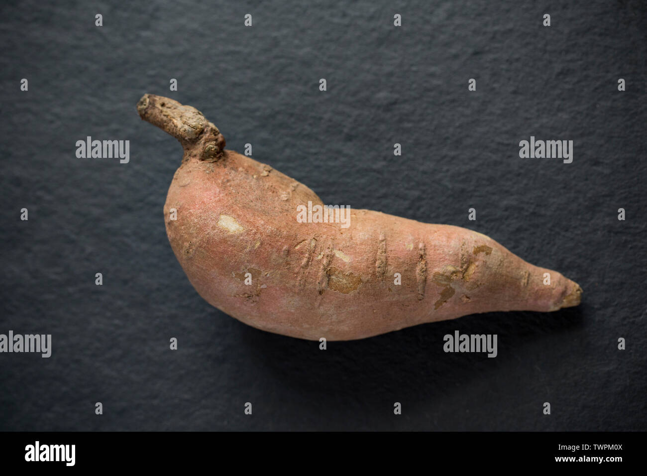 A single raw, uncooked sweet potato imported from the USA and bought from a supermarket in the UK displayed on a dark stone background. Dorset England - Stock Image