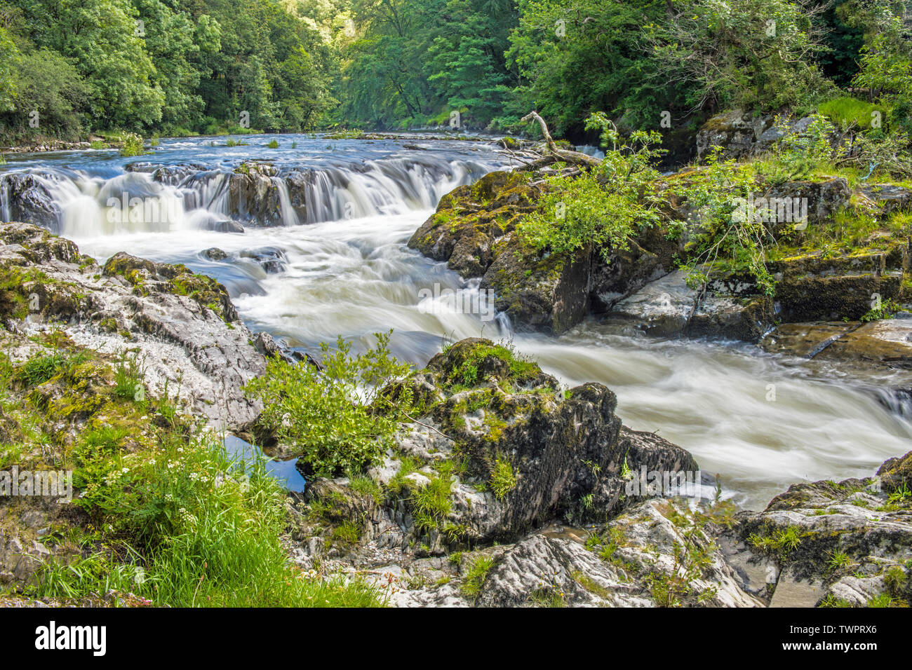 The Cenarth Falls on the River Teifi on the Carmarthenshire Cardiganshire Border in West Wales - Stock Image