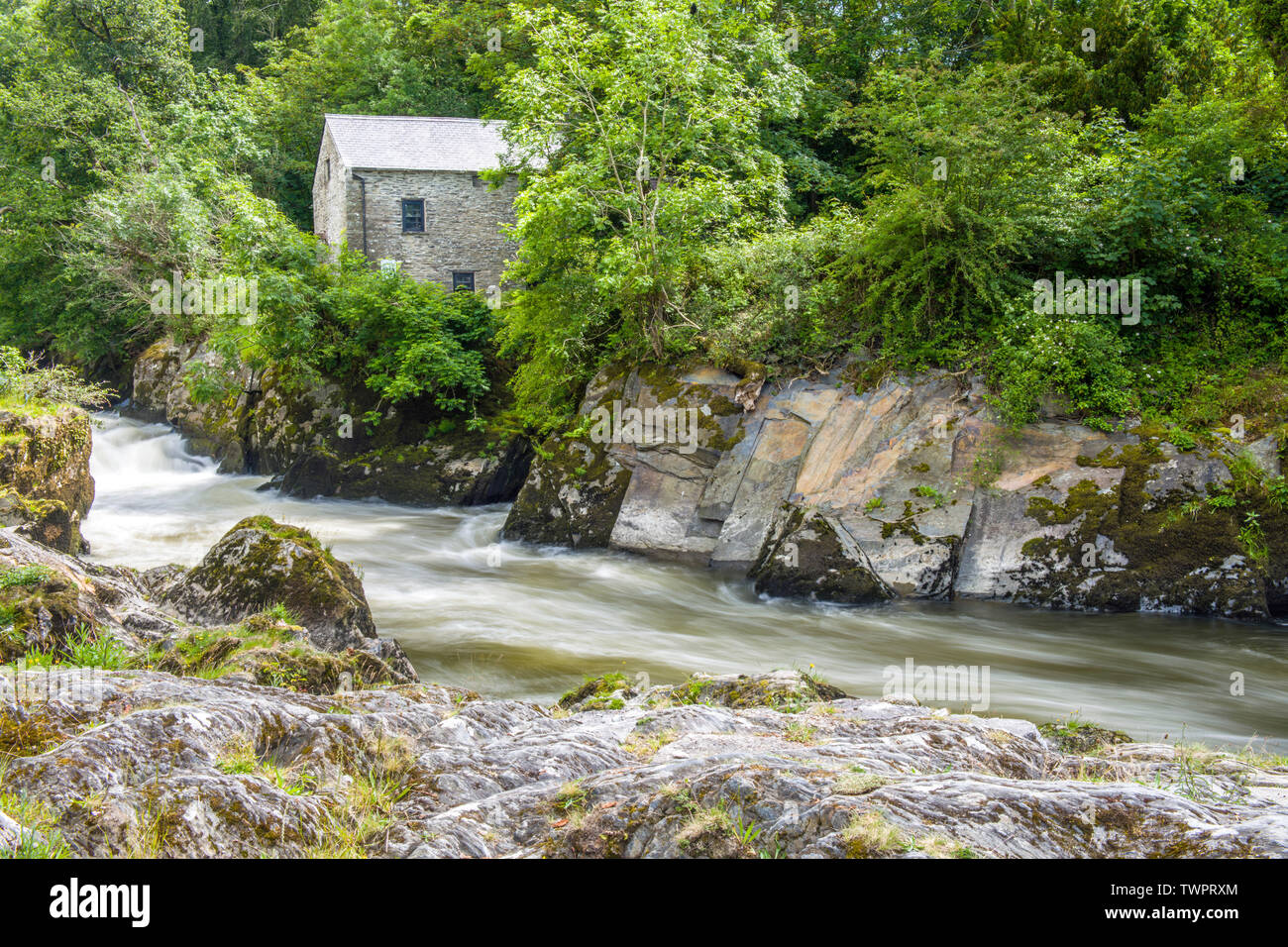 The Cenarth Falls on the River Teifi on the Carmarthenshire Cardiganshire Border in West Wales Stock Photo
