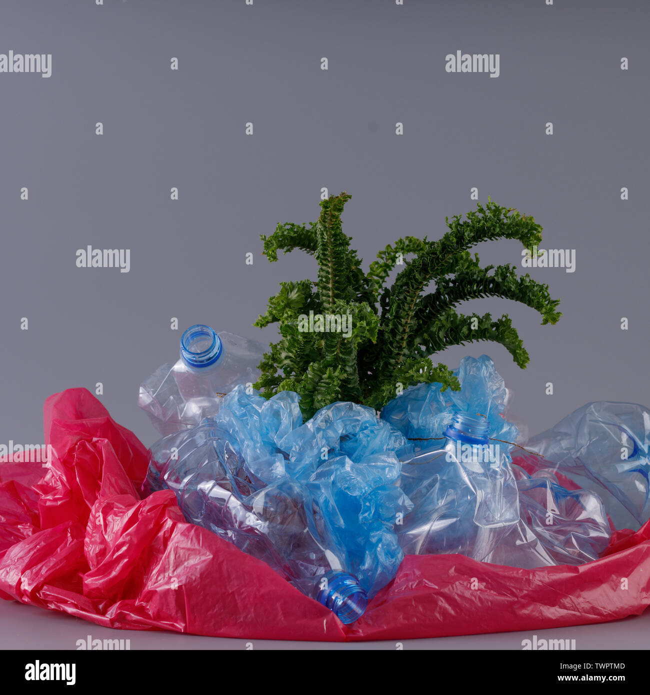 Green tender fern plant in a heap of plastic. Concept of environmental protection and plastic processing. - Stock Image