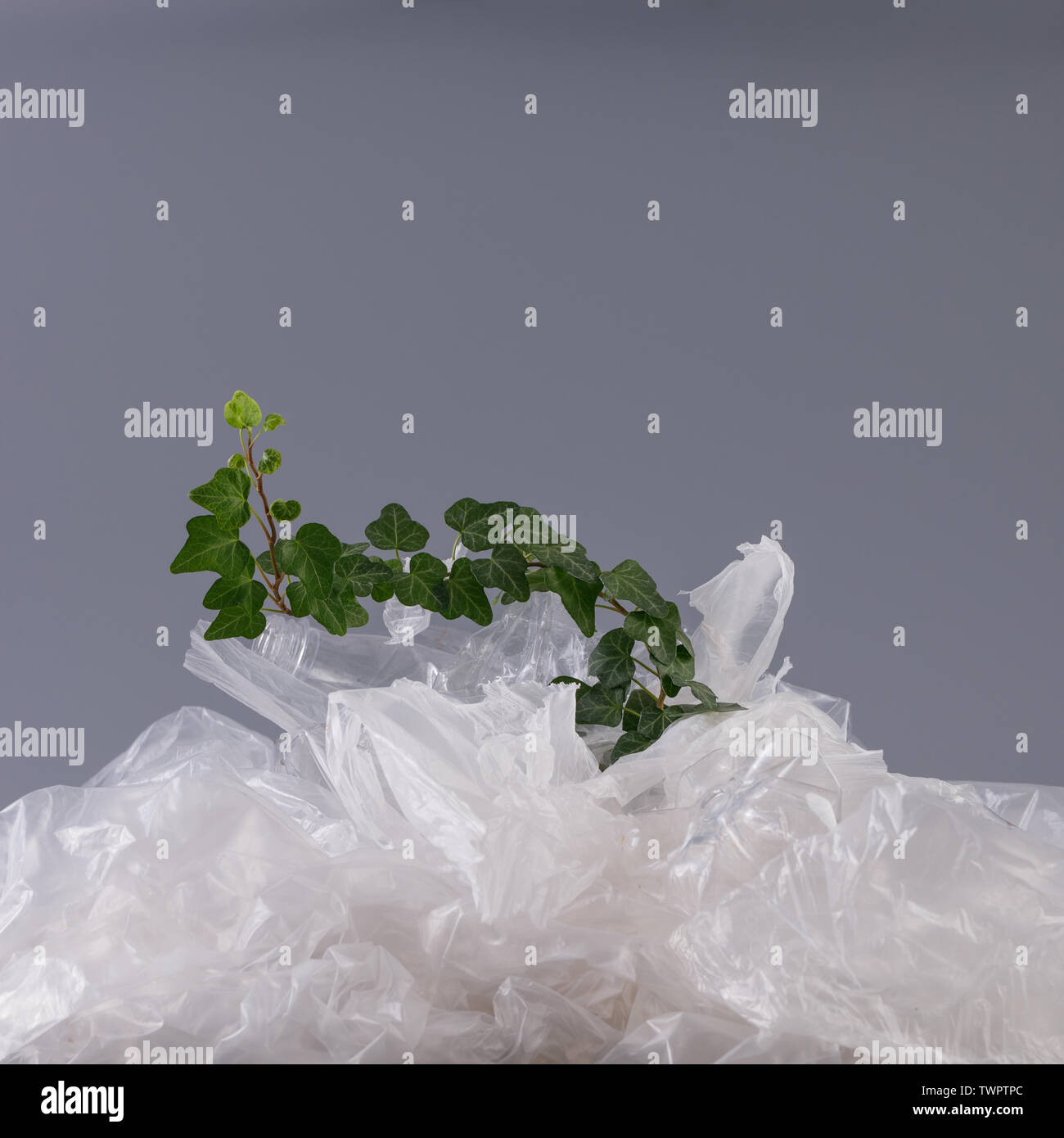 Gentle bindweed plant in a heap of plastic. Concept of environmental protection and plastic processing. - Stock Image