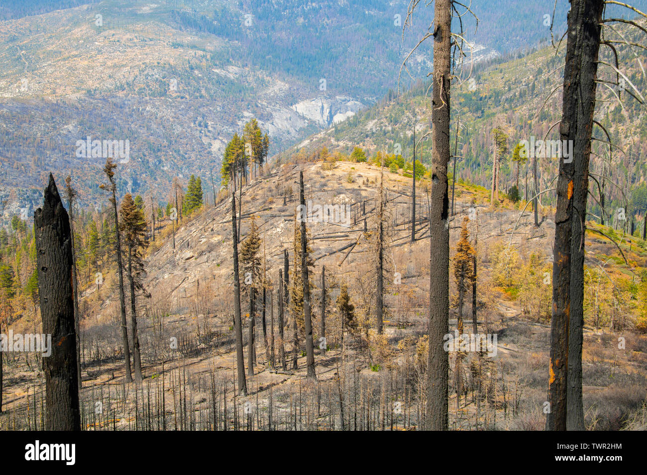Aftermath of forest fires, Yosemite National Park, CA, USA, by Bill Lea/Dembinsky Photo Assoc - Stock Image