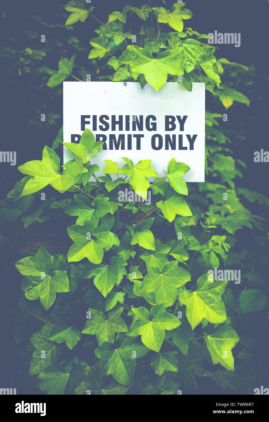 Fishing By Permit Only Sign Hidden In The Foliage By A Scottish River Stock Photo