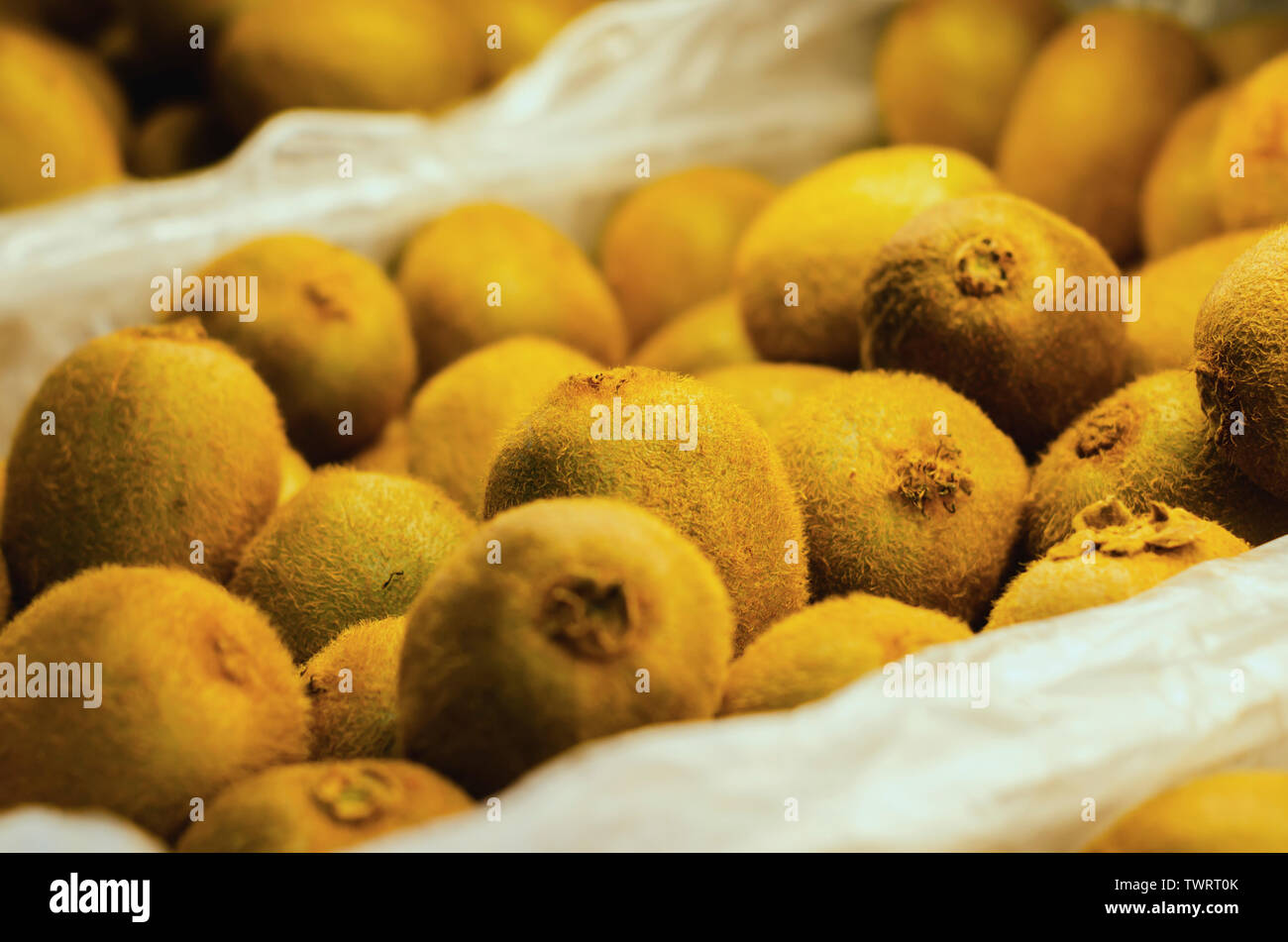 kiwis on retail sale in supermarket shelf with beautiful flashes of natural lights - Stock Image