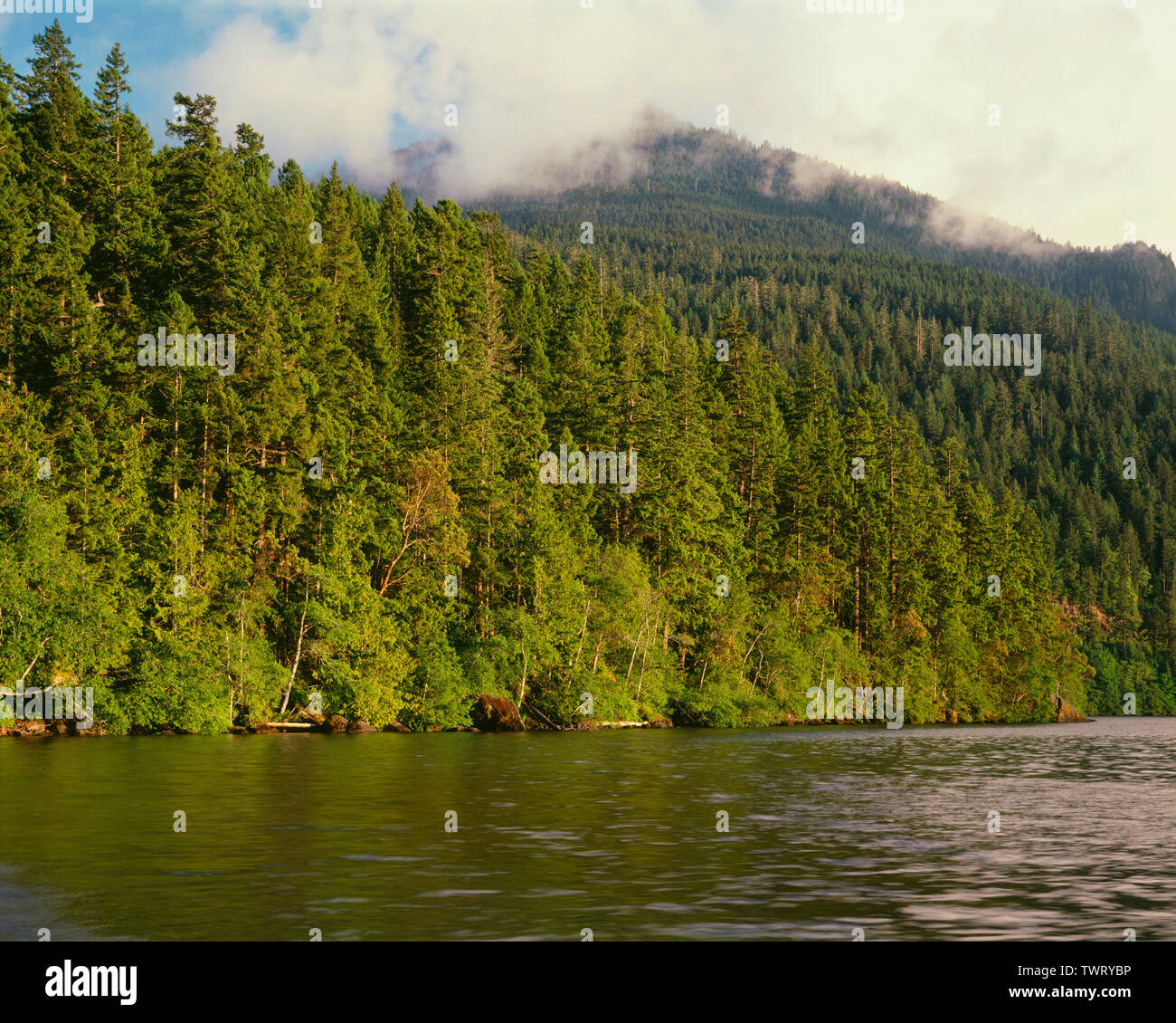 USA, Washington, Olympic National Park, Evening light highlights conifers above Lake Crescent while Mt. Storm King (top right) is shrouded by clouds. - Stock Image