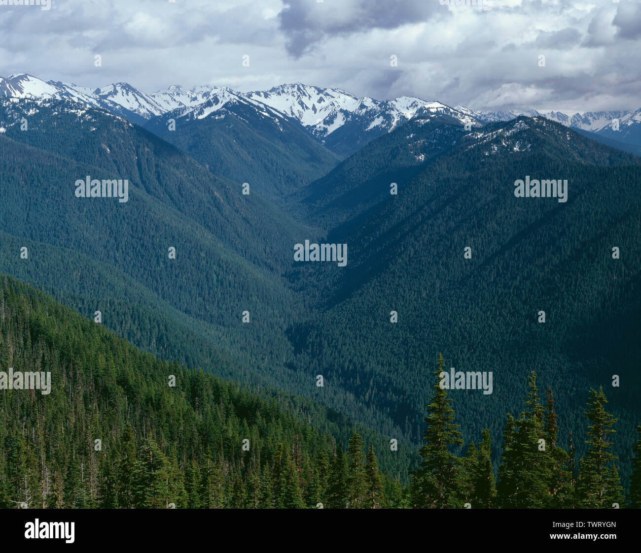 USA, Washington, Olympic National Park, Late spring view south from near Hurricane Ridge towards Lillian River Valley and McCartney Peak (top right). - Stock Image