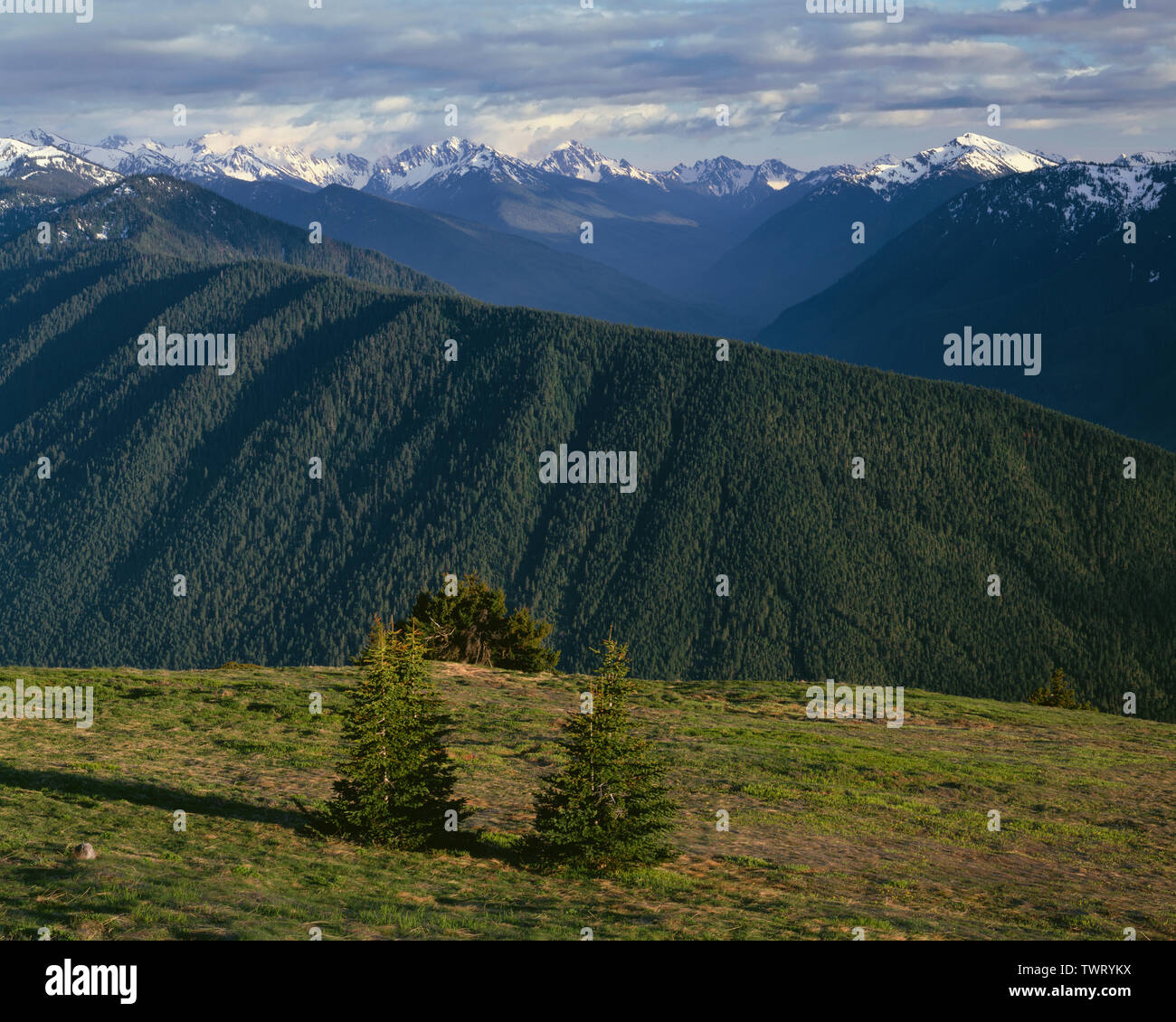 USA, Washington, Olympic National Park, Late springtime view south from near Hurricane Ridge towards ridgeline and Elwah River Valley (top right). Stock Photo