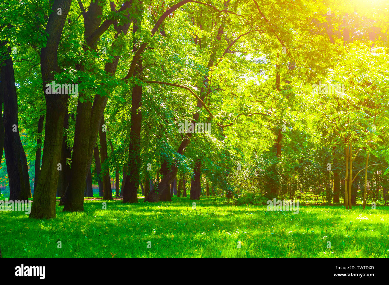 Summer park landscape in sunny weather - park trees and narrow path lit by soft sunlight. Summer park nature in sunny day, diffusion filter - Stock Image