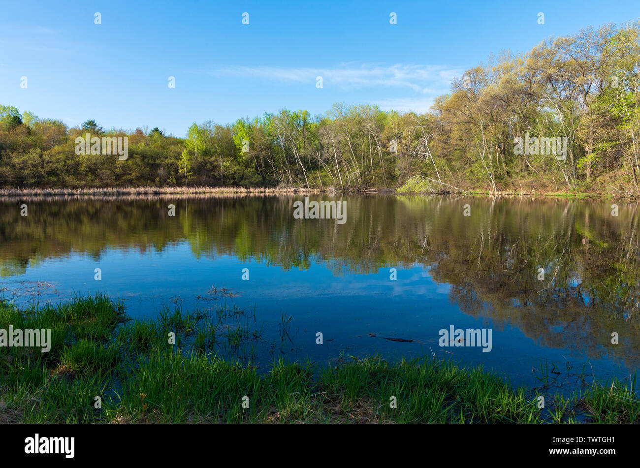 forest across pond and reflections atop water during spring at salem hills park in inver grove heights minnesota - Stock Image