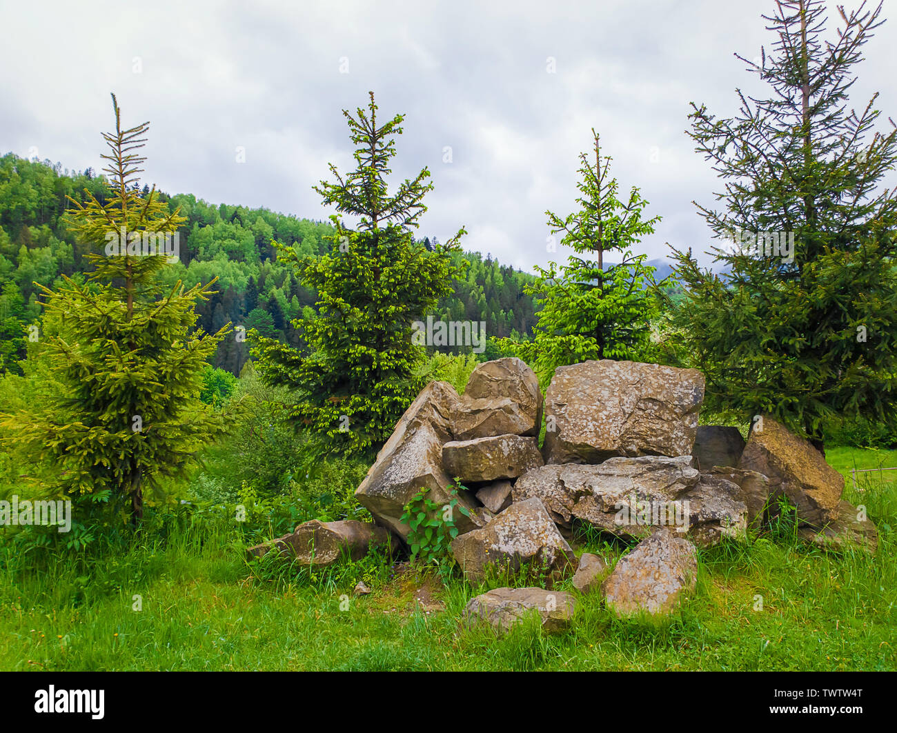 Beautiful spring day in the carpathian mountains with coniferous forest on the top of the hills. Natural landscape, fir trees and a pile of stones. Di - Stock Image