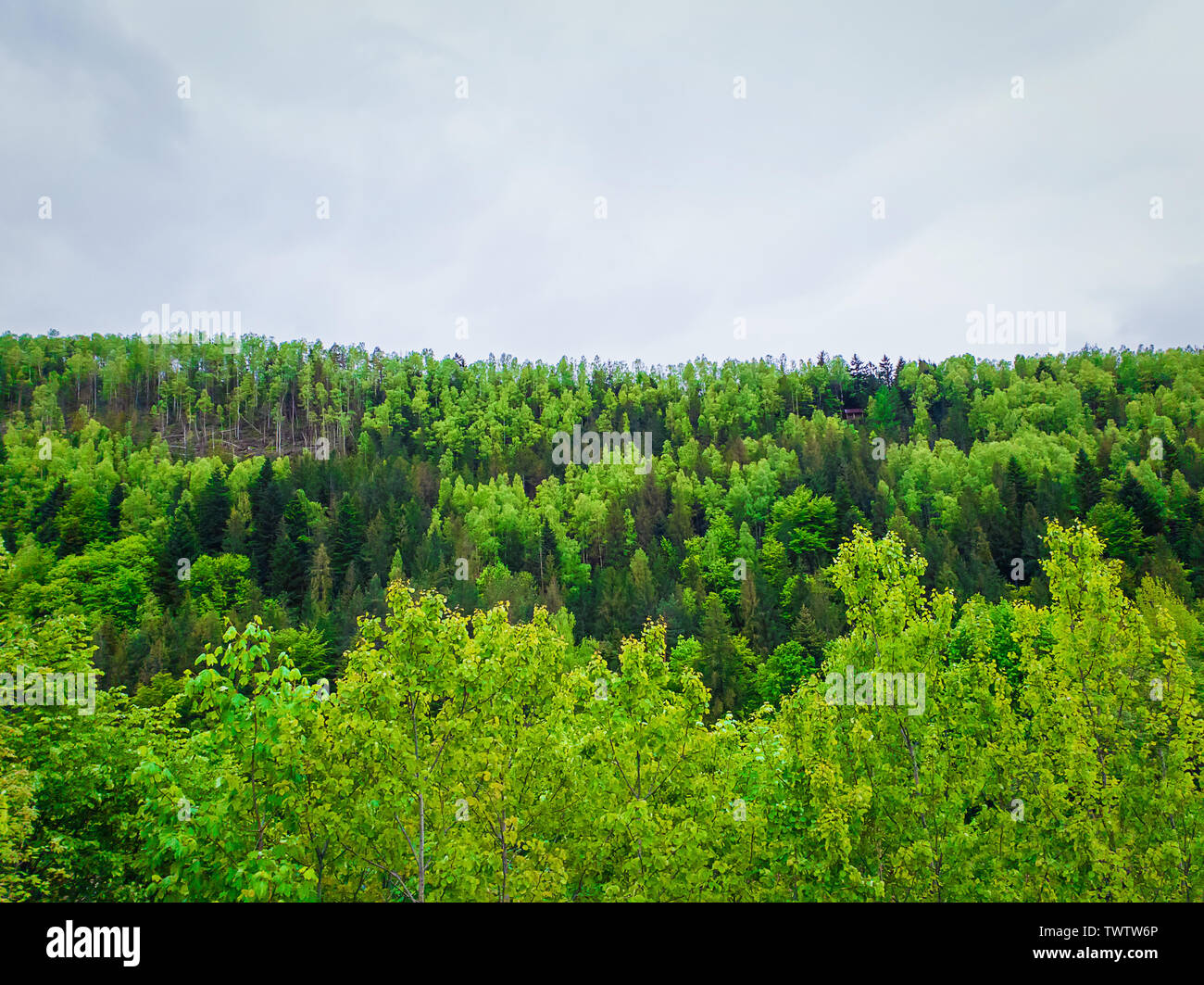Spring Forest Texture With Different Shades Of Green Lot Of Trees On The Mountain Hill As A Pattern Wild Nature Landscape Fresh Background And Clou Stock Photo Alamy