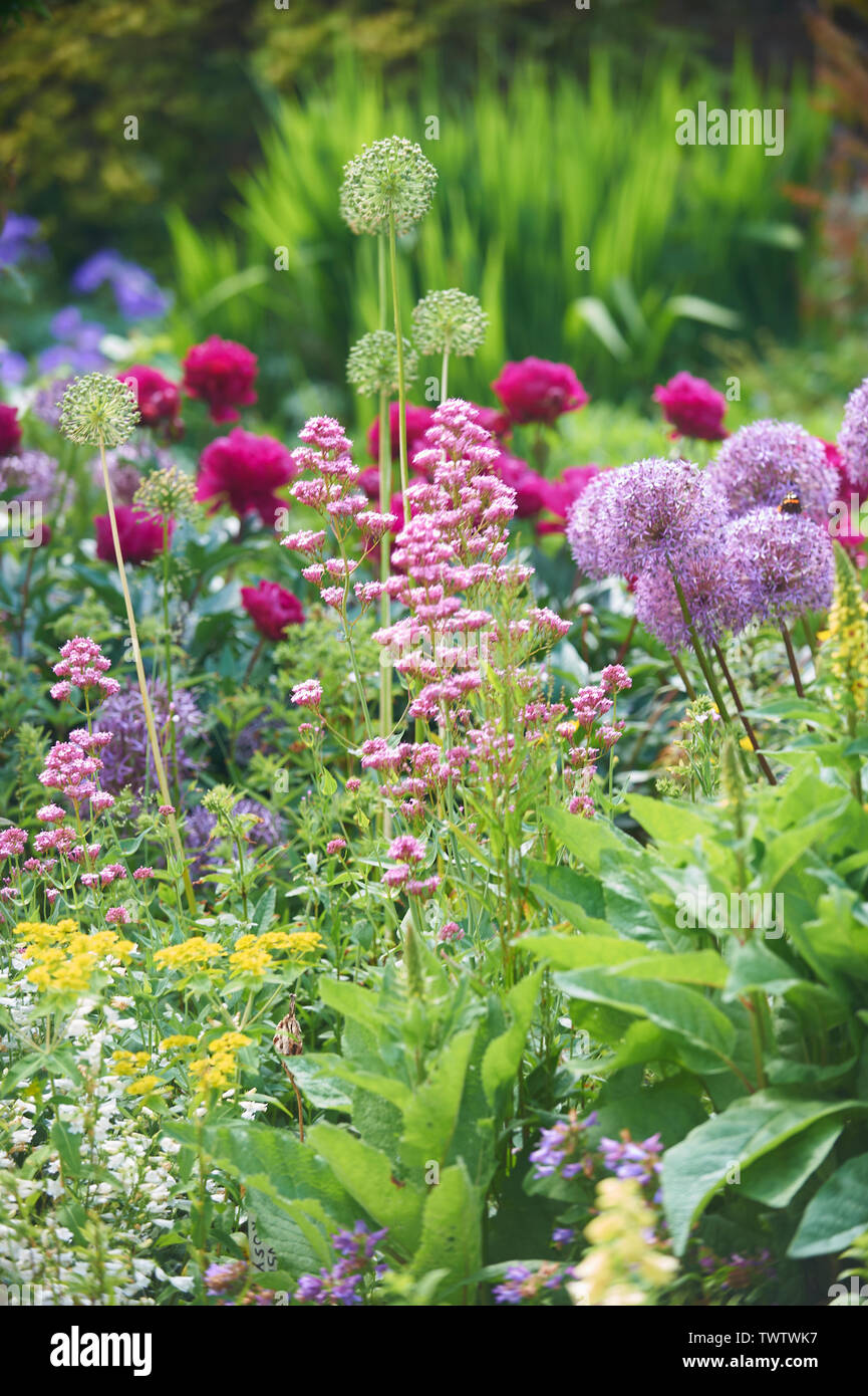 A wide selection of summer flowering plants in an English walled garden during the summer months, England, UK, GB. - Stock Image