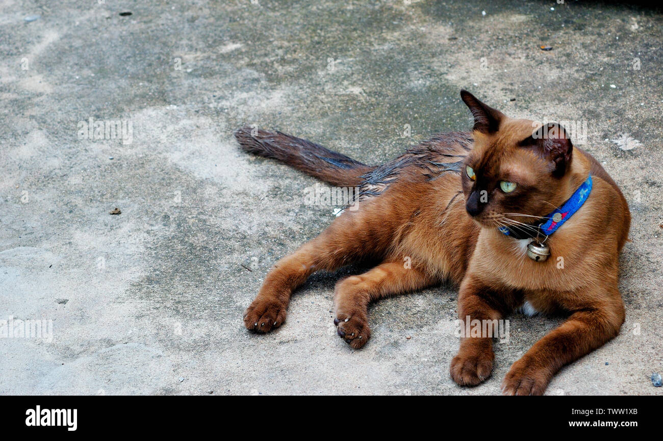 Dark brown cat on the cement floor Stock Photo