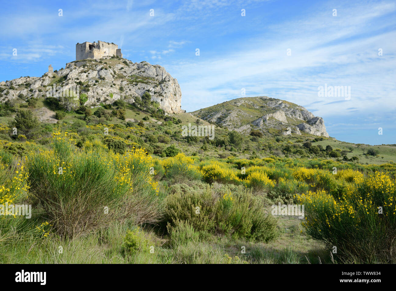 Flowering Bloom, Cytisus scoparius, & Maquis Below the Castellas de Roquemartine Ruined Castle, c12th-c13th, Eyguières Les Alpilles Provence France - Stock Image