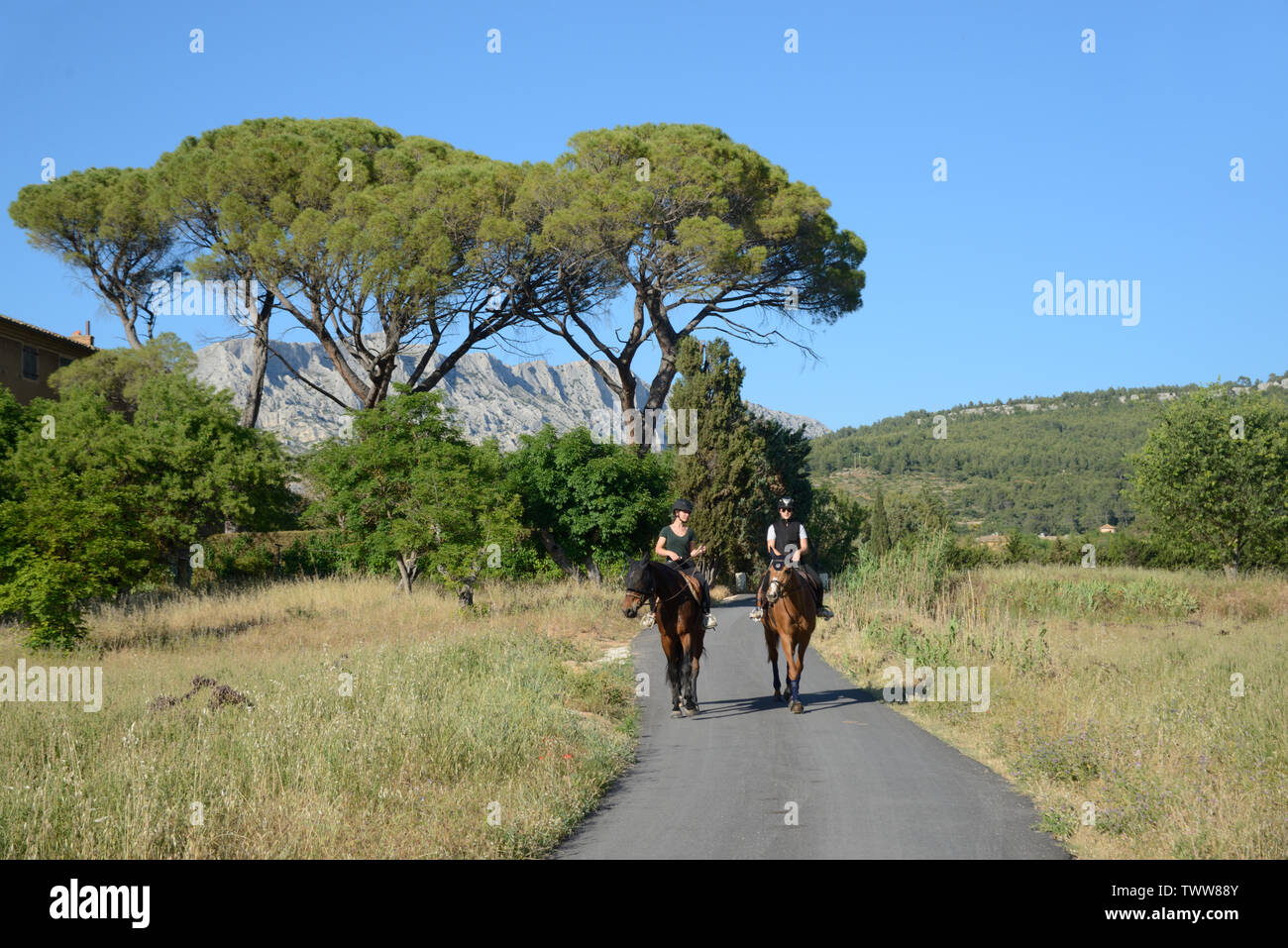 Horsehiding in the Countryside near Aix-en-Provence with Mont Sainte-Victoire Mountain & Parasol Pines in the Background Provence France - Stock Image