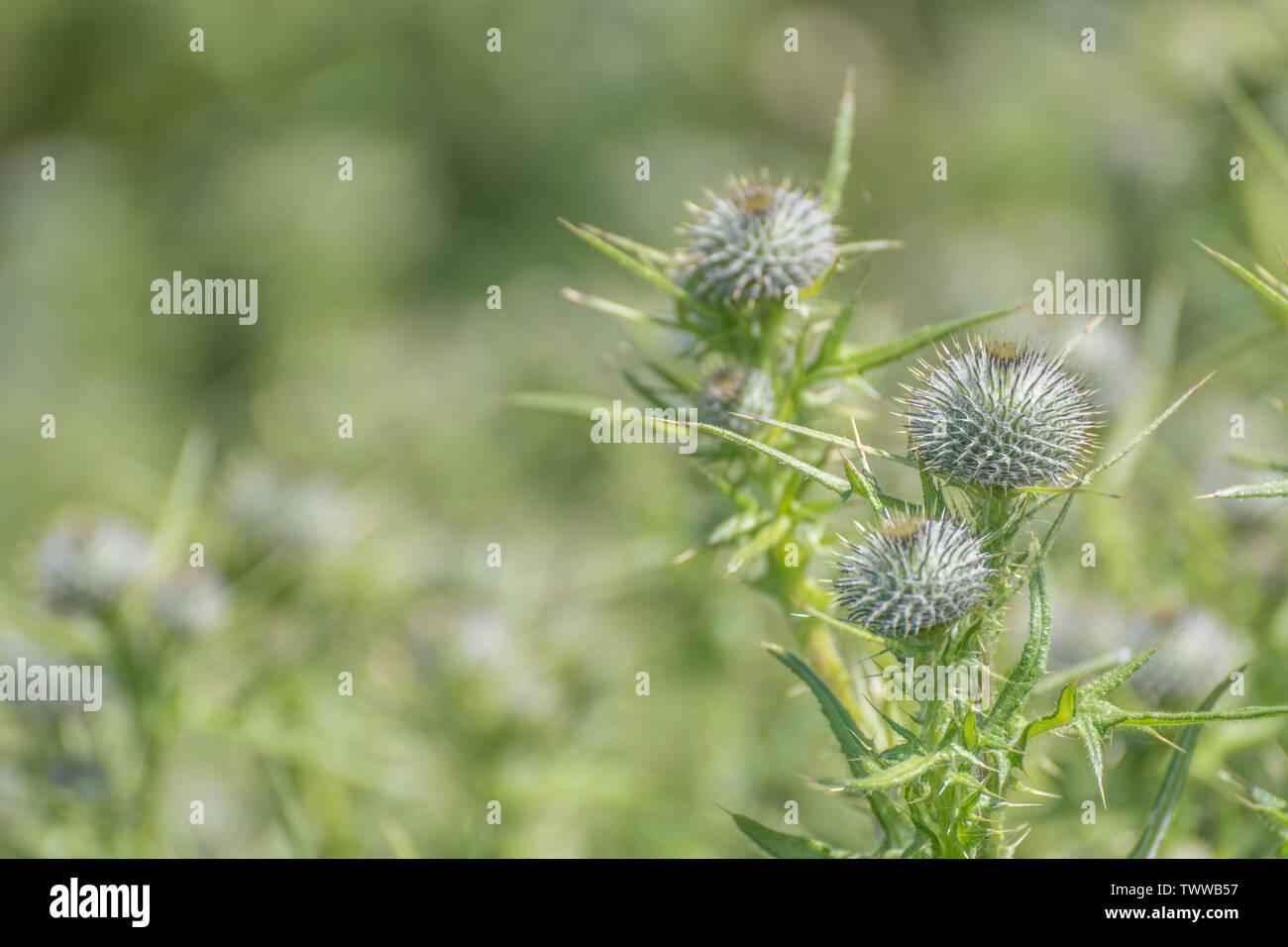 Flowerbud Stock Photos & Flowerbud Stock Images - Alamy