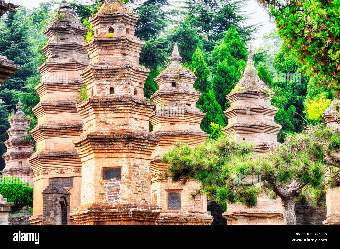 The ancient talin buddhist pagoda forest near the Shaolin Temple in Dengfeng city in Henan Province China. - Stock Image