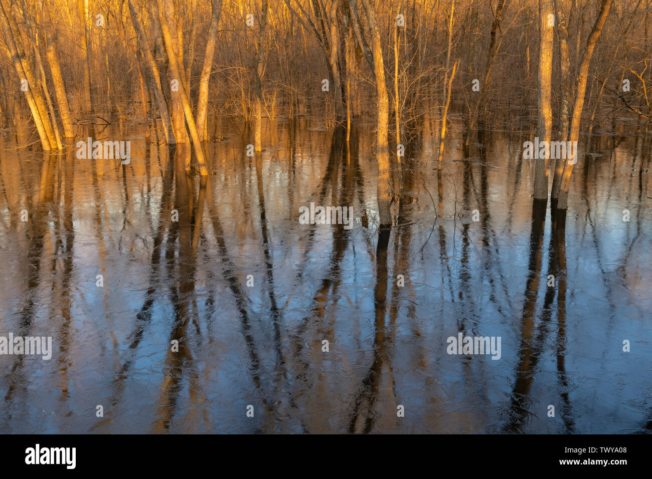 Spring flooding along floodplain of the St. Croix River, Spring, MN, USA, by Dominique Braud/Dembinsky Photo Assoc - Stock Image