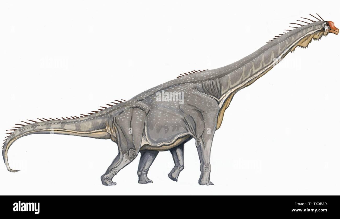 """Brachiosaurus altithorax; 2007; File:Brachiosaurus DB.jpg; Богданов dmitrchel@mail.ru; "" Stock Photo"