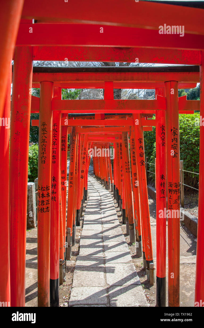 Red Torii Gates at the Nezu Shrine form corridors to mark the entranceway, and symbolic transition from the mundane world to a sacred one - Stock Image