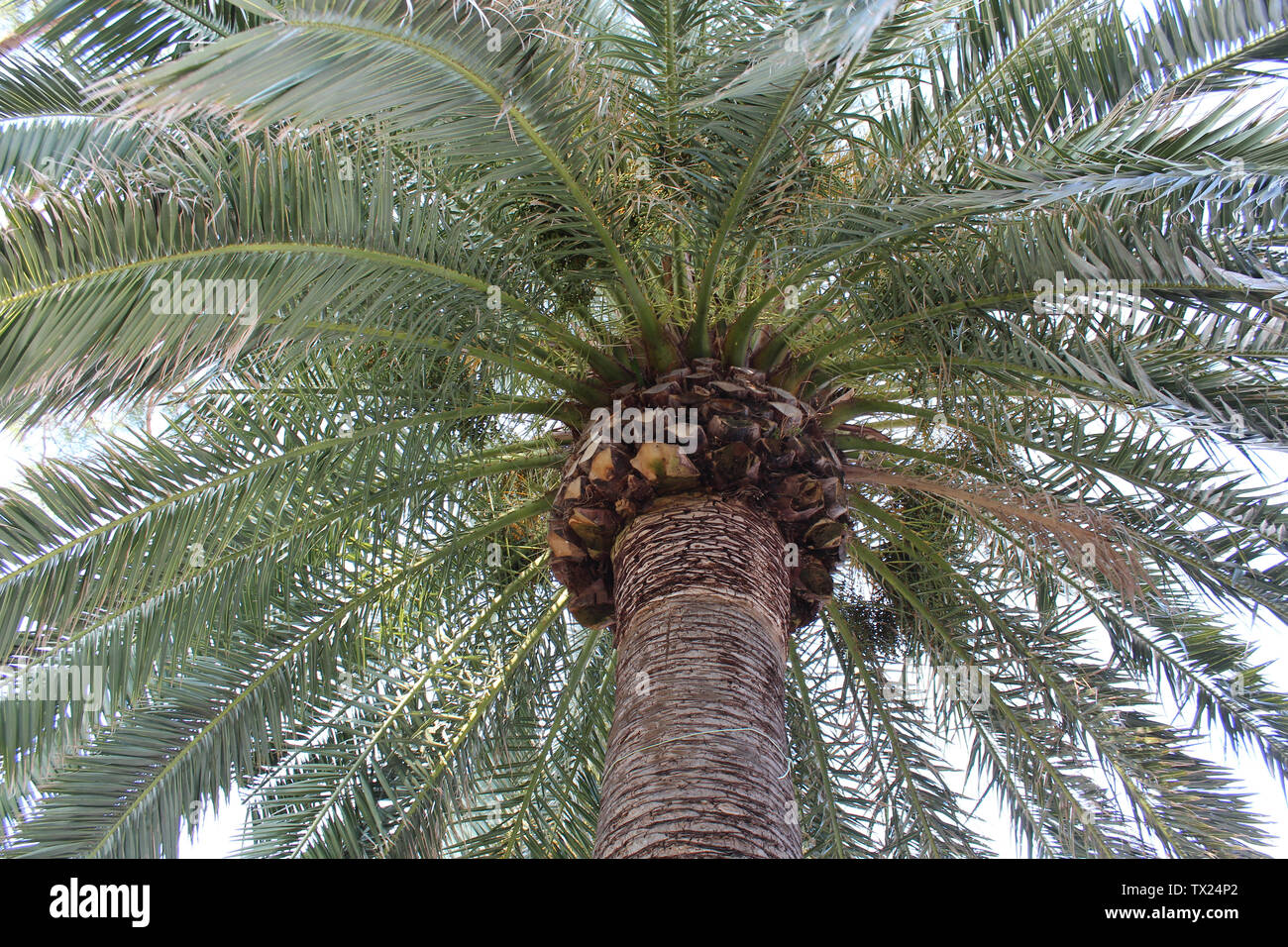 Rapallo, Italy - 03 27 2013: Palm trees, View of the streets of Rapallo - Stock Image