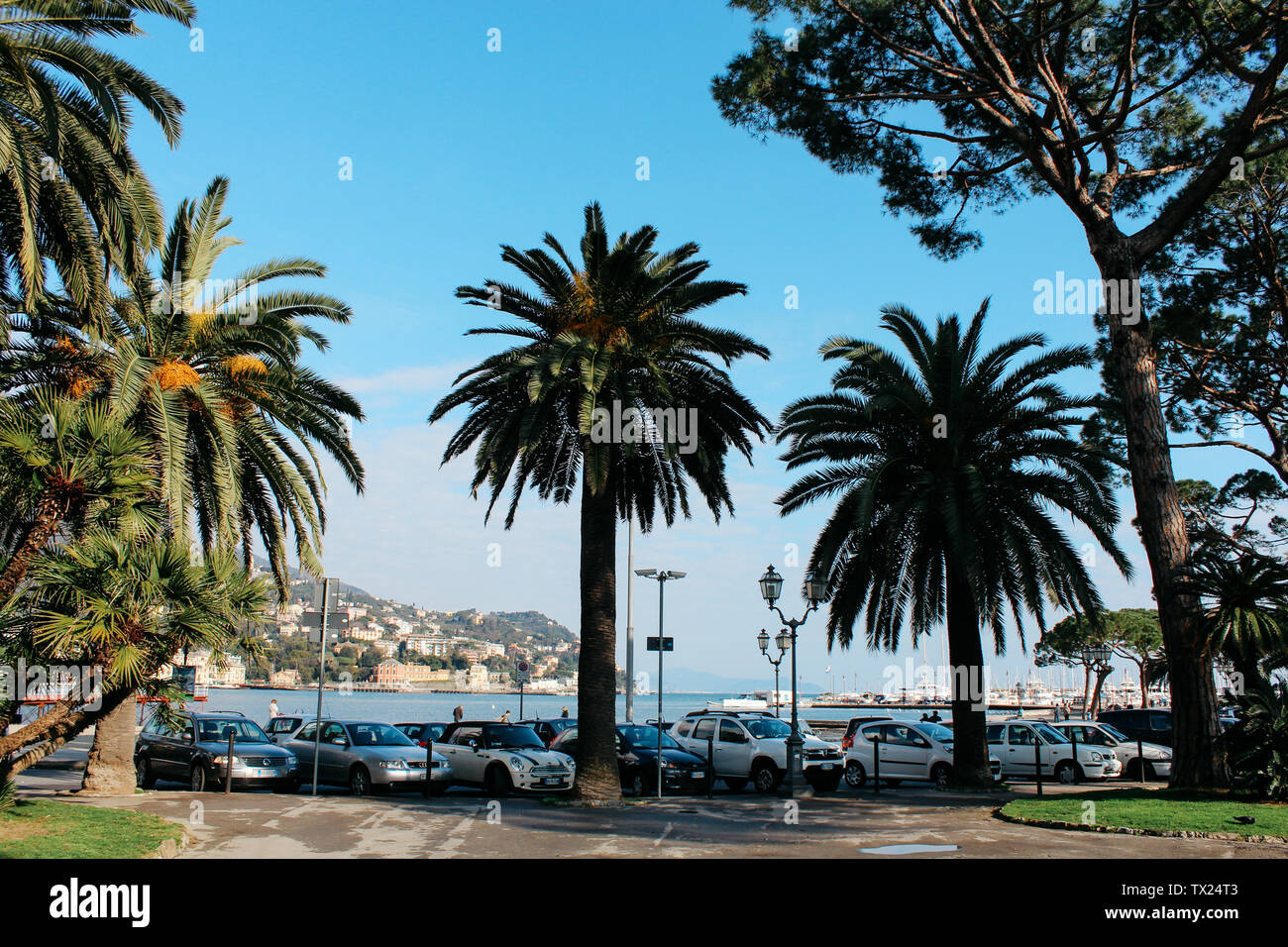Rapallo, Italy - 03 27 2013: Palm trees on the waterfront, View of the streets of Rapallo - Stock Image