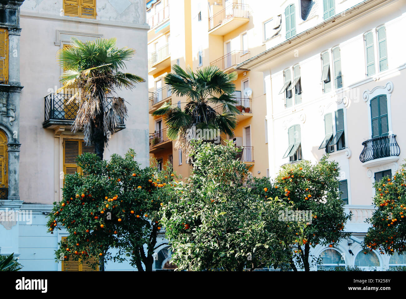 Rapallo, Italy - 03 27 2013: Palm trees, houses. View of the streets of Rapallo - Stock Image