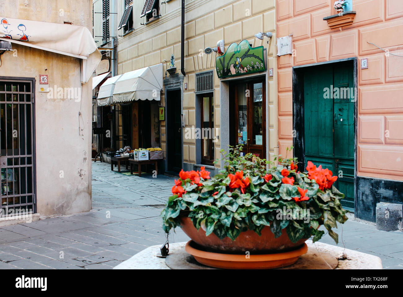 Rapallo, Italy - 03 27 2013: flowers in the pot. View of the streets of Rapallo. - Stock Image