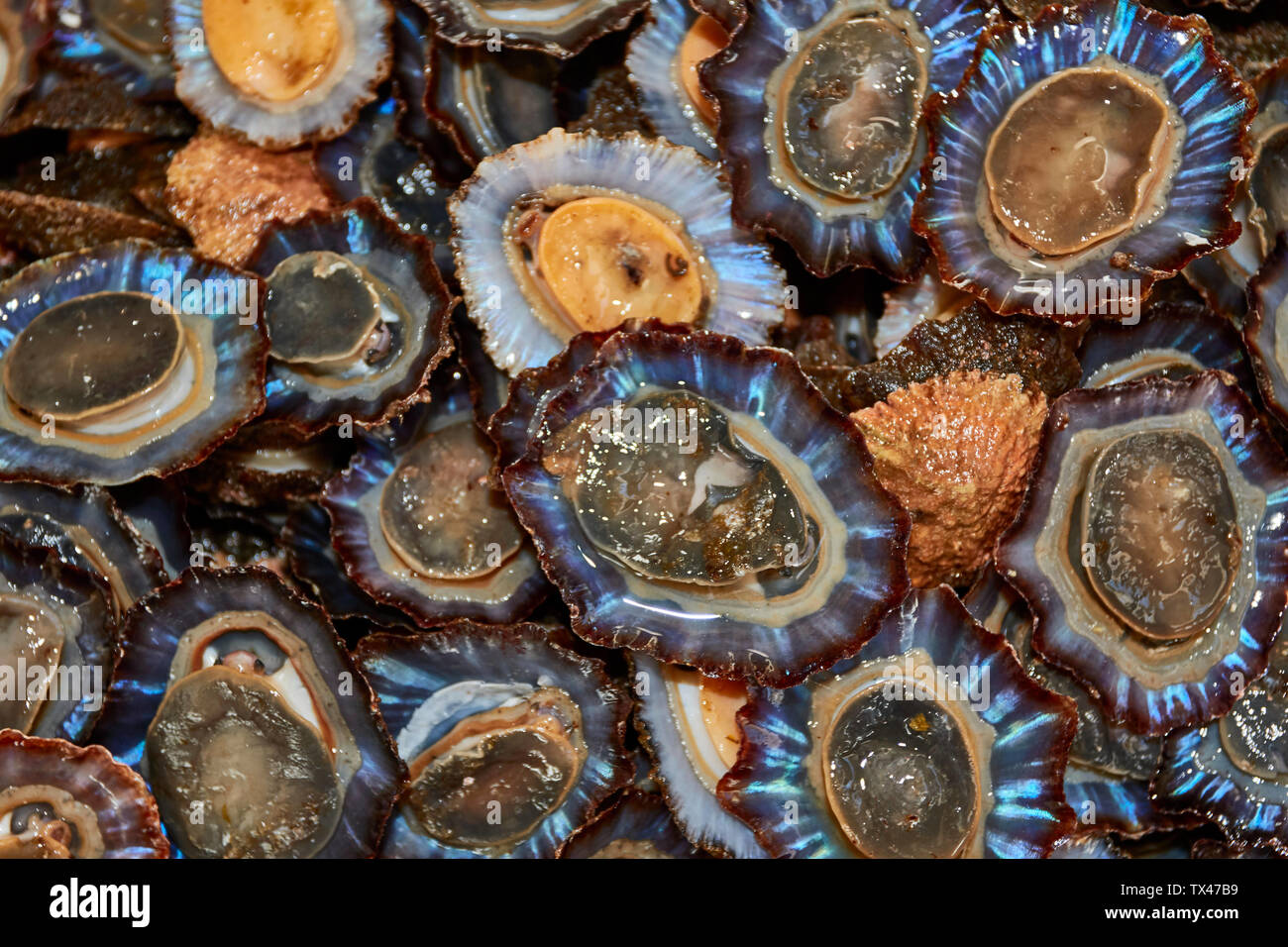 Abstract of common limpet in the farmers market, Funchal, Madeira, Portugal, European Union Stock Photo