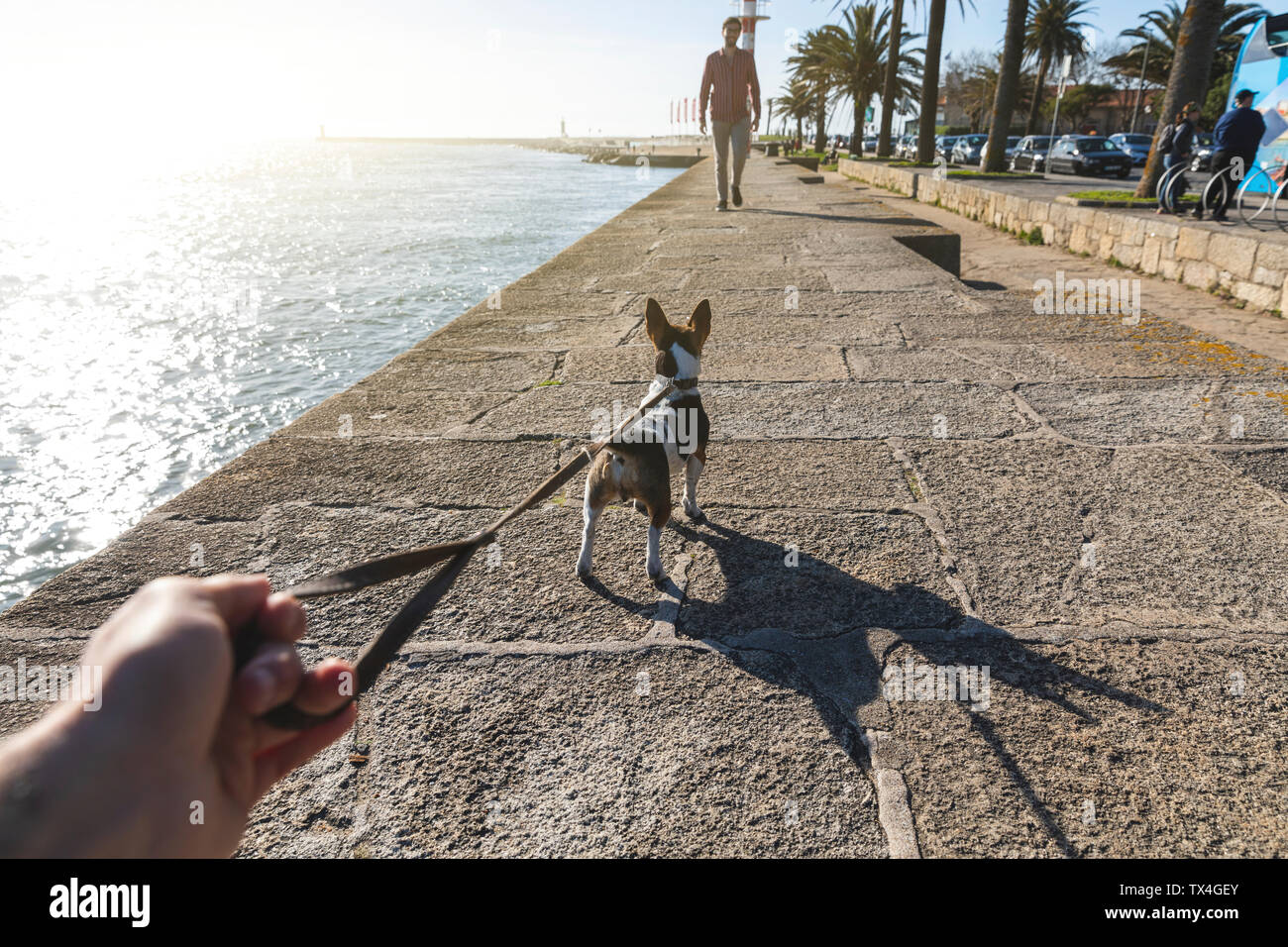 Portugal, Porto, man going walkies with dog on promenade - Stock Image