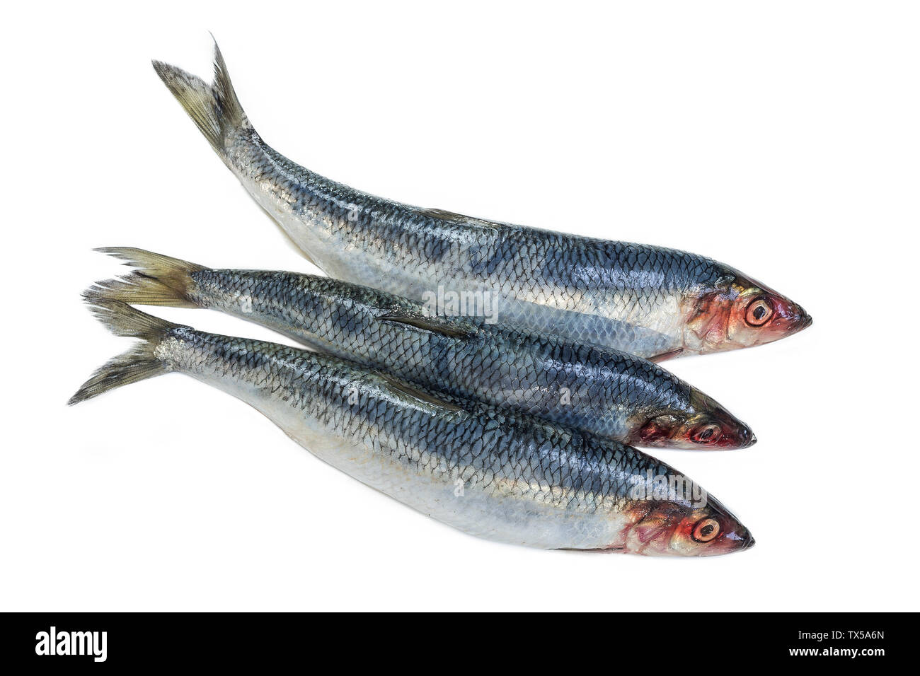 Three Fresh Herring Fish Isolated On White Background Stock