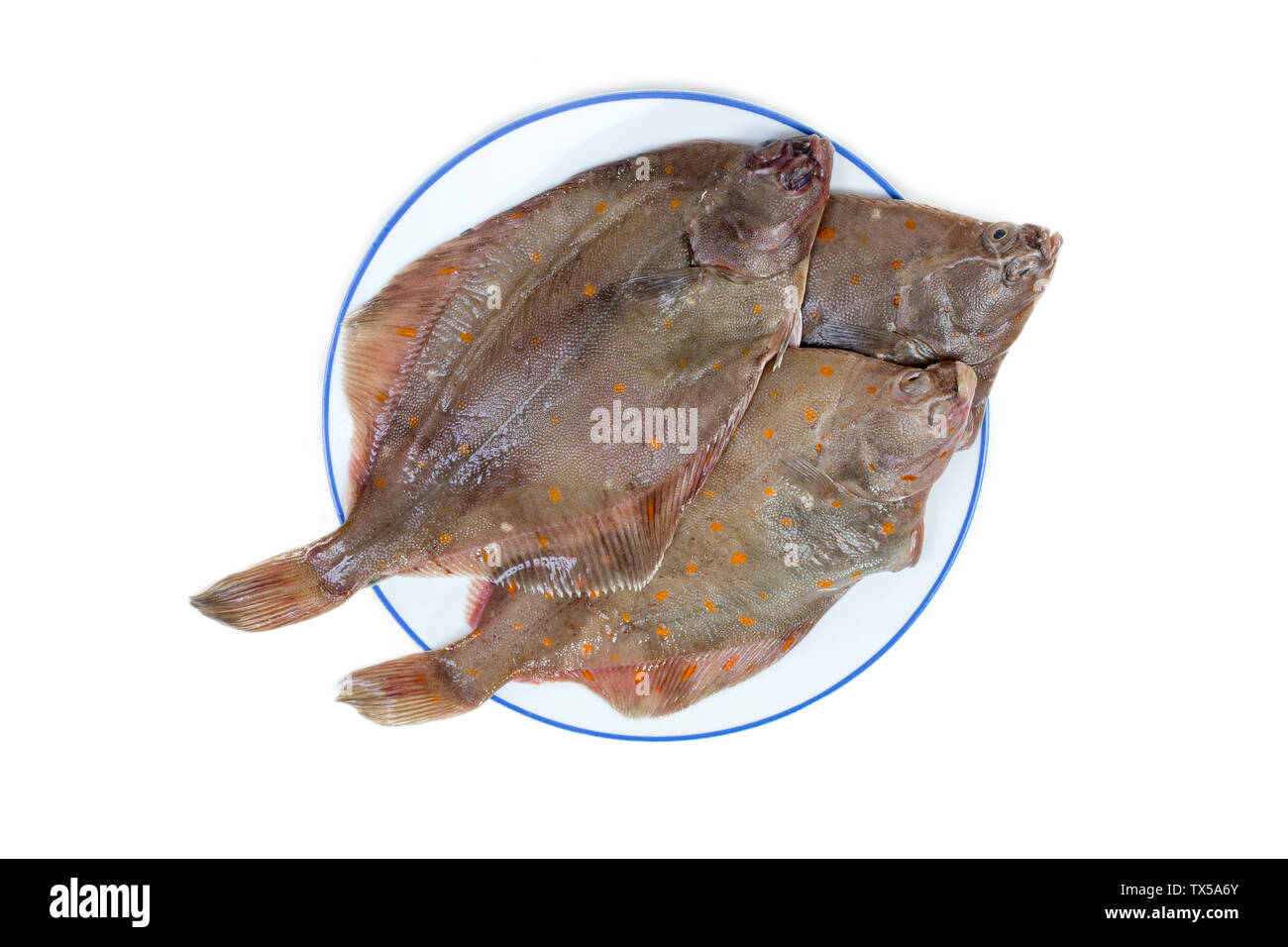 Whole Plaice flatfish in a plate isolated on a white background. - Stock Image