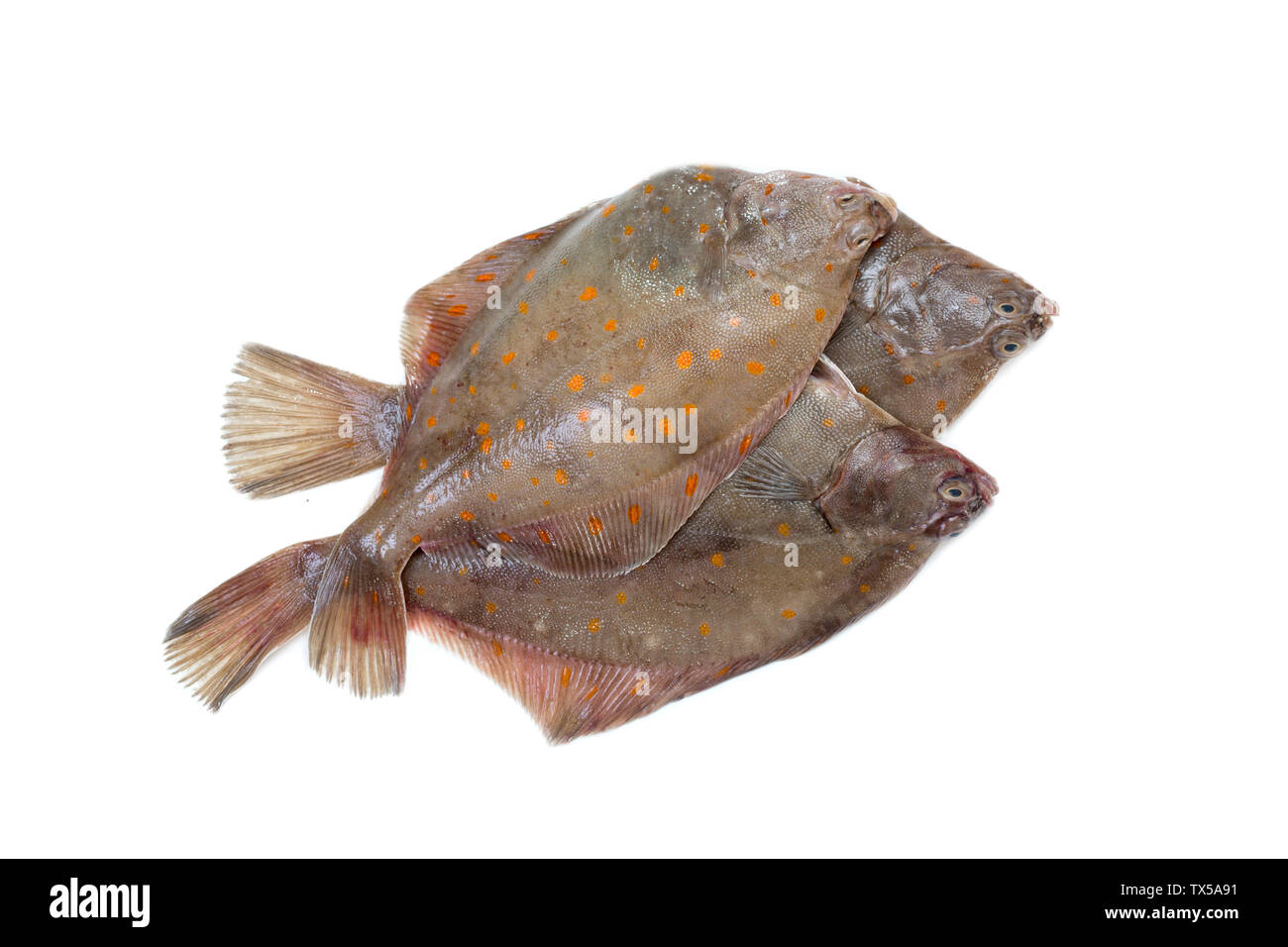 Whole Plaice flatfish - Stock Image