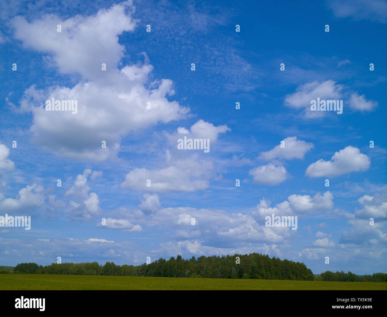 Blue sky with white cumulus clouds. Sunny day, summer - Stock Image