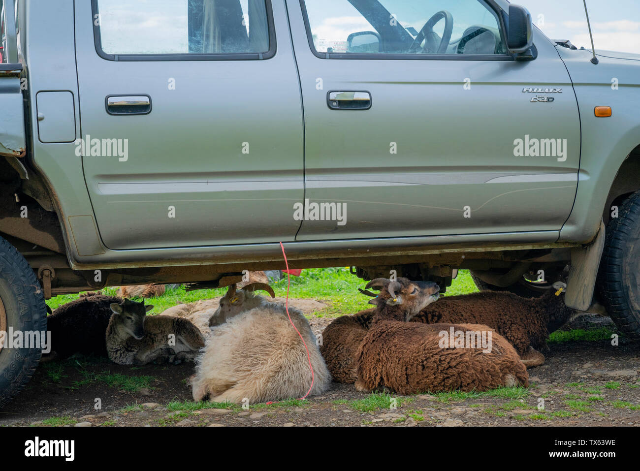 Toyota Hilux Stock Photos & Toyota Hilux Stock Images - Alamy