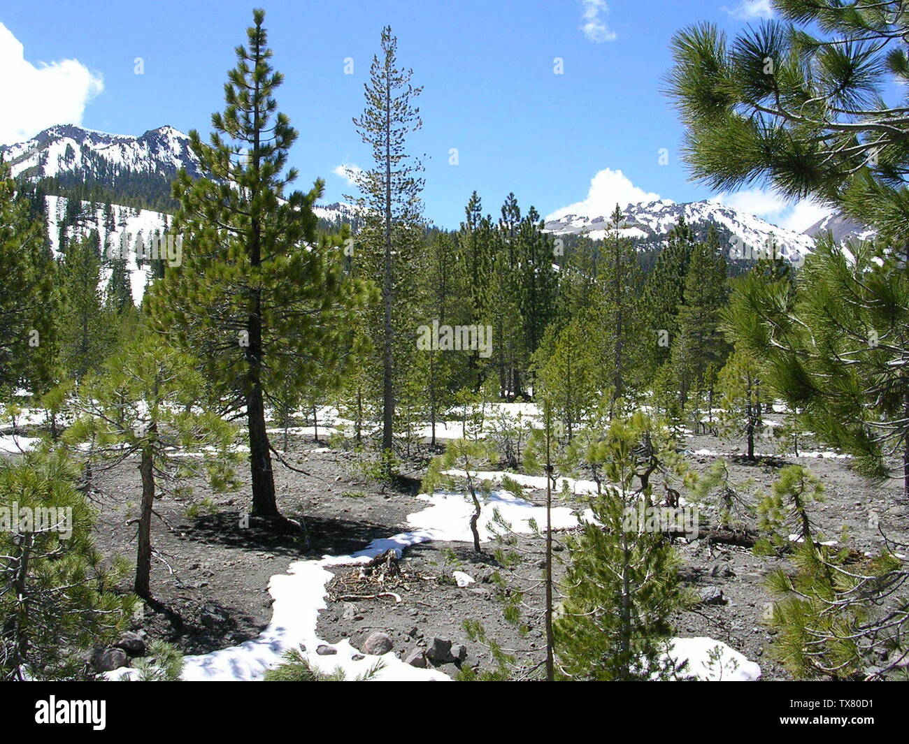 'English: Lassen National Park.  The Devastated Area, looking west. The peaks are probably Crescent Crater on the left, Chaos Crags on the right. Mixed conifer forest with Pinus jeffreyi (long needles) and Pinus monticola (short needles). Русский: Национальный парк Lassen, в США.  Вид с востока на район Devastated Area (пораженное место).  Вершины вероятно Crescent Crater слева, Chaos Crags справа.; 22 May 2005; Own work; Smack (talk); ' - Stock Image