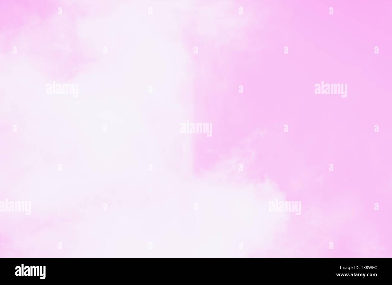 Beautiful white soft fluffy ccirrocumulus louds on a pink sky background. Copy space - Stock Image