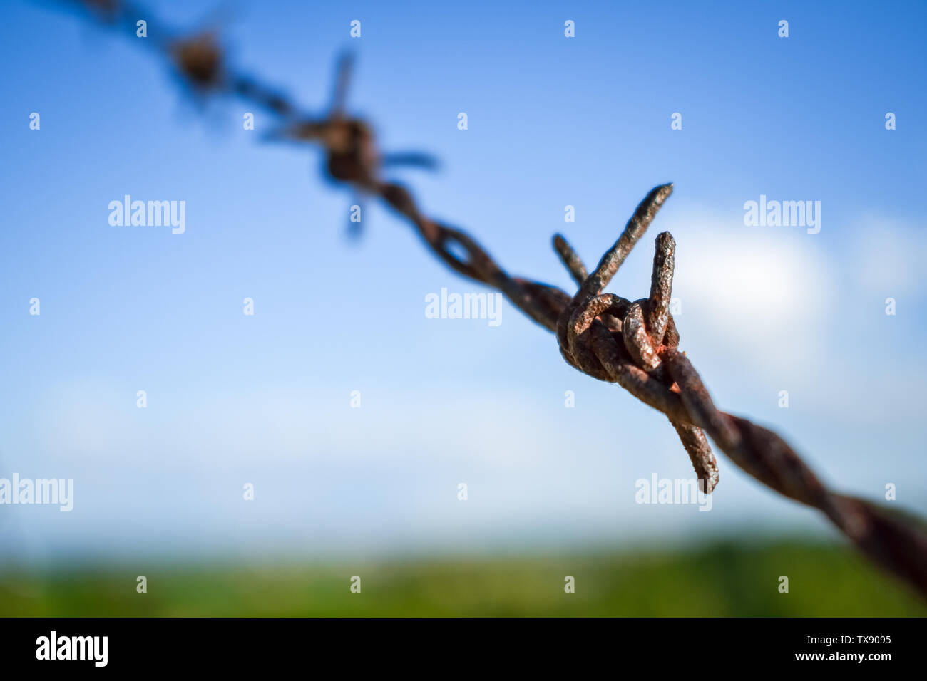 Freedom concept. Wire fence on a background of blue sky and green field - Stock Image