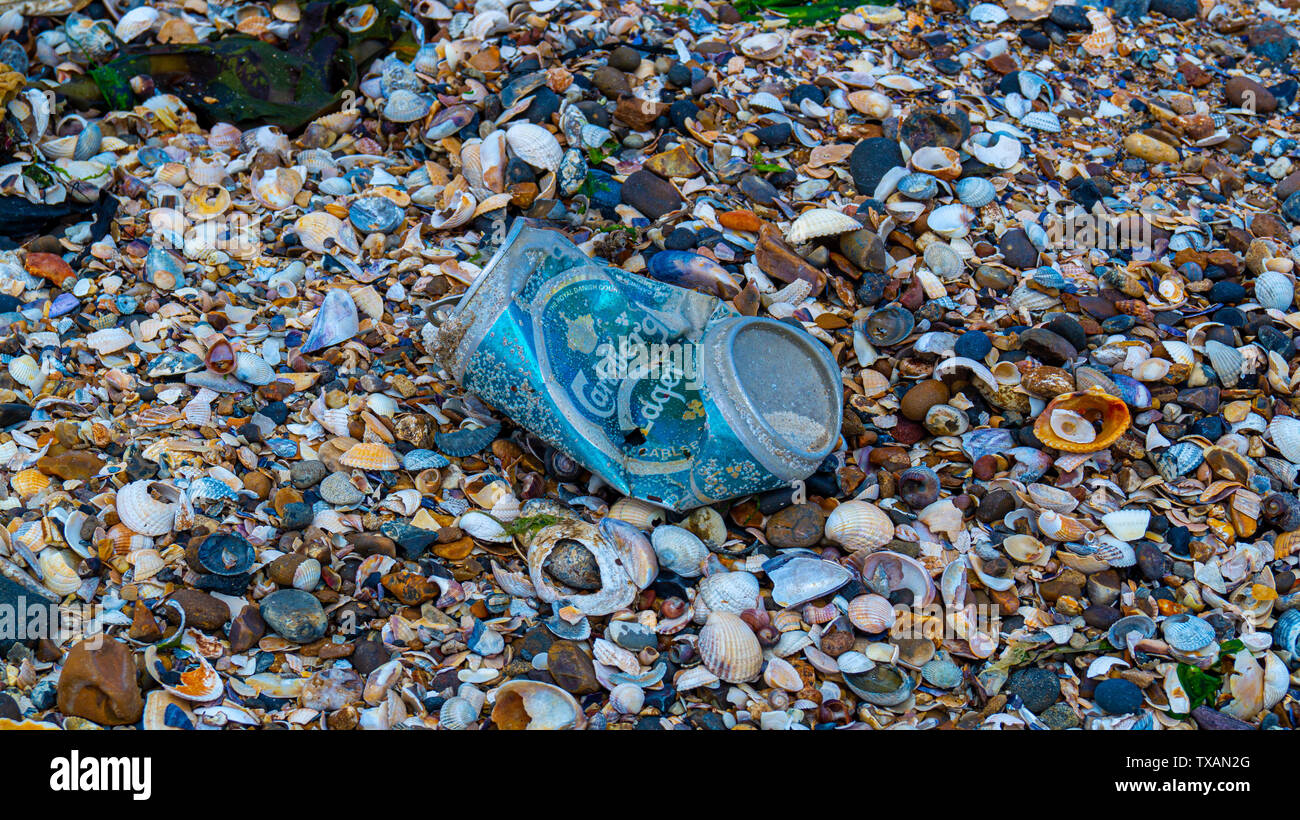 close up of beer can weathered on beach, save our oceans, pollution in the waters and ocean - Stock Image