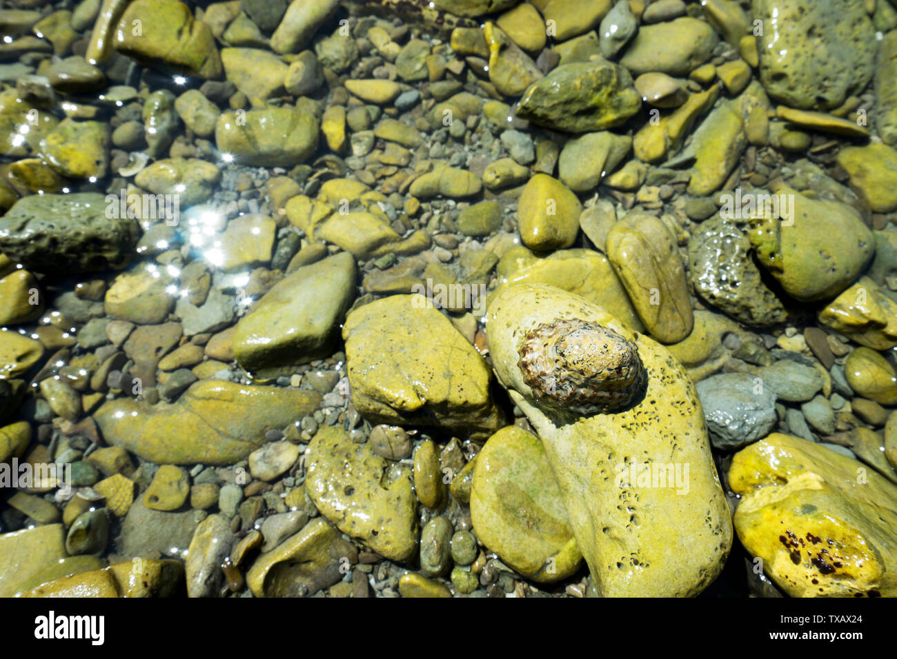 rock beach with wildlife - Stock Image