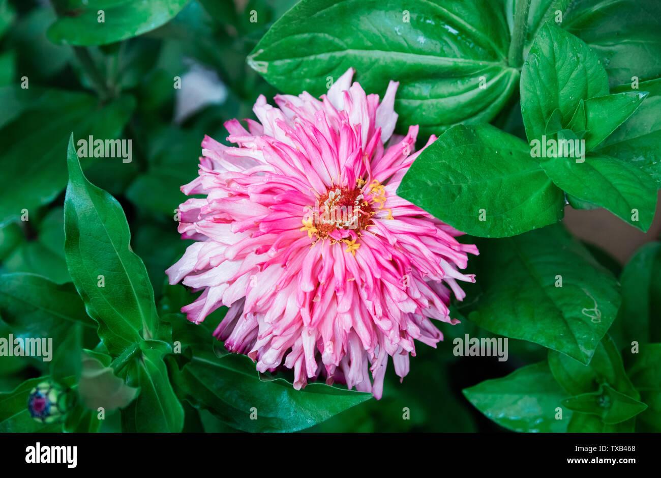Beautiful Blooming Flowers In Garden Summer Background