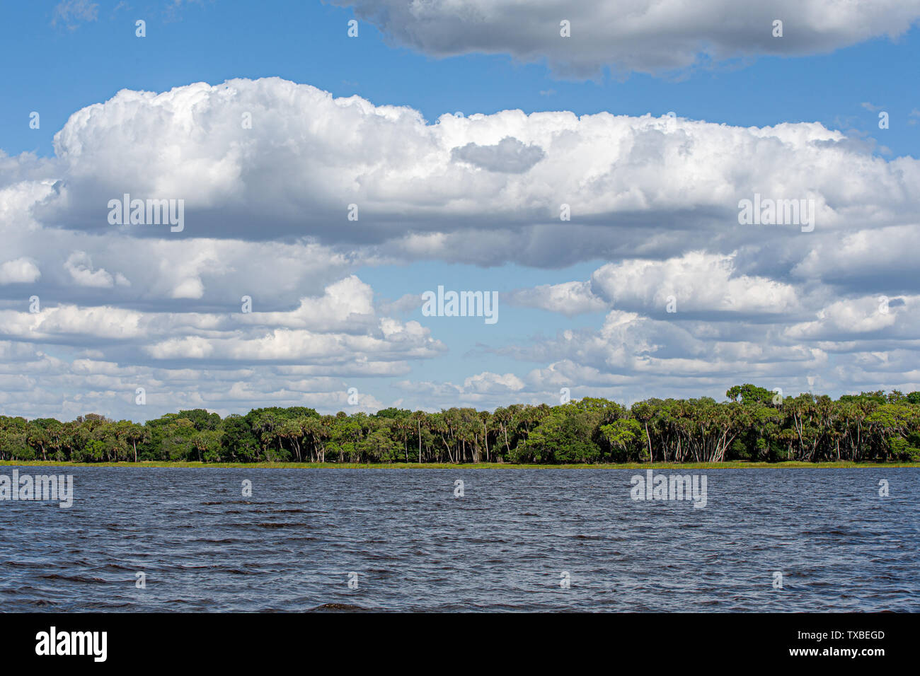 Lake, shoreline trees, and blue sky with clouds and copy space if needed.  Nature, vacation, travel background. - Stock Image