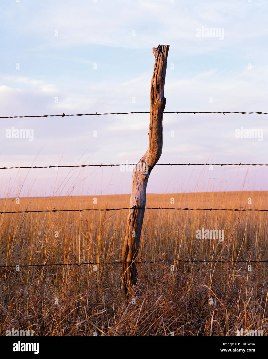 Fencepost with barbed wire at dusk on the Kansas prairie - Stock Image