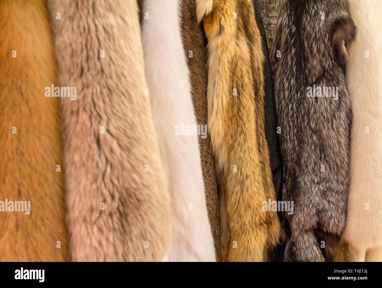 various hanging fur pieces seen at a medieval market - Stock Image
