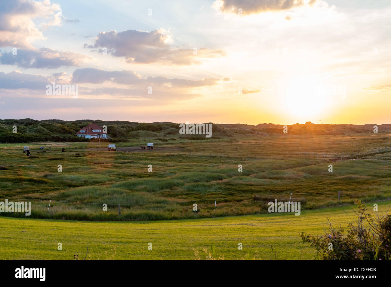 Salt marshes on Juist an East Frisian island in Germany in summer. Stock Photo