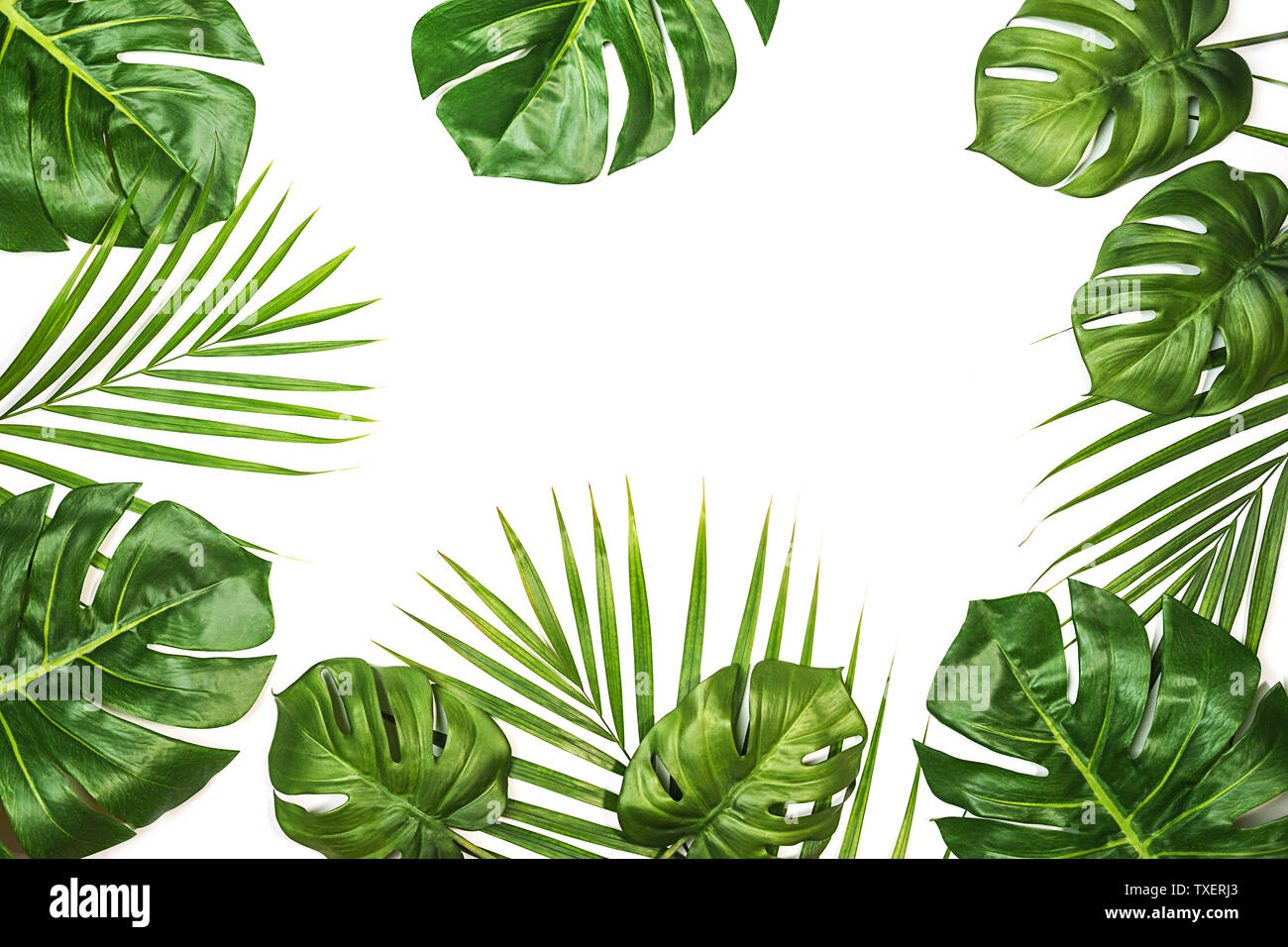 Tropical Leaves Monstera And Palm Isolated Swiss Cheese Plant Isolated On White Background Stock Photo Alamy Choose from over a million free vectors, clipart graphics, vector art images, design templates, and illustrations created by artists worldwide! https www alamy com tropical leaves monstera and palm isolated swiss cheese plant isolated on white background image257252075 html