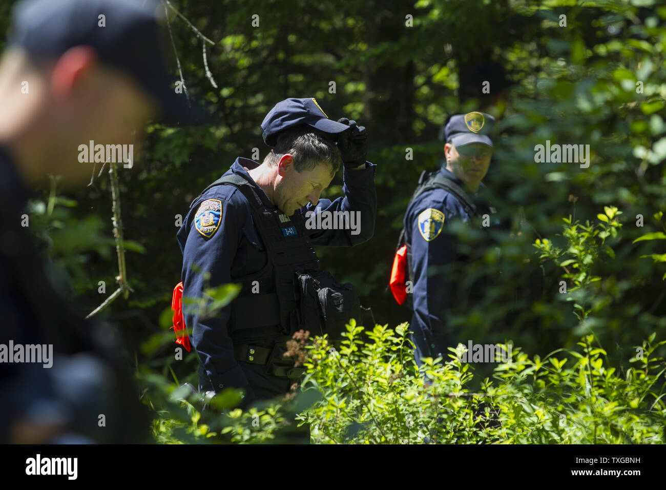 Law enforcement personnel search a wooded area in Mountain
